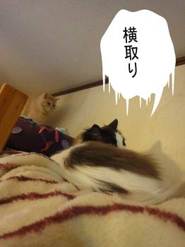 mikaru-17040801.jpg
